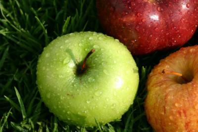 Conseils pour les diabètiques –  La santé par les plantes