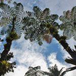 La Martinique, terre de randonnées