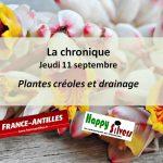Des plantes créoles de drainage après les vacances
