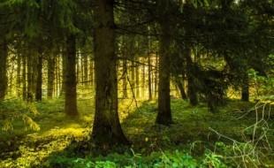 Agirc Arrco, l'arbre qui cache la forêt : 2ème partie
