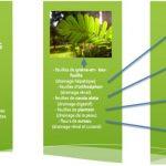 Plantes créoles, goutte et acide urique – 2ème partie