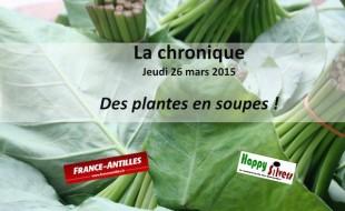 Des plantes en soupes pour les seniors