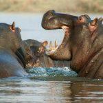 Daan Viljoen Game Park, un important parc de la Namibie