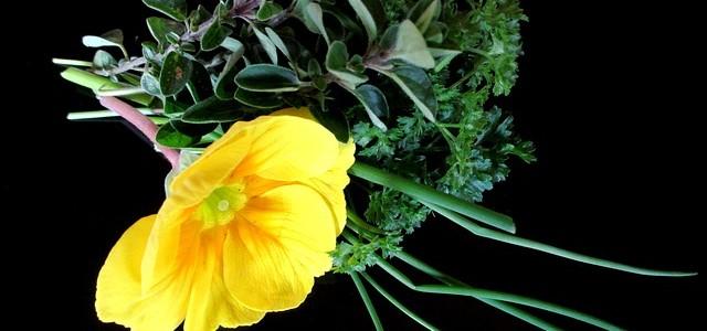 Cuisiner avec des herbes aromatiques for Cuisiner avec une plancha