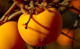 Des super fruits qui nous veulent du bien ! Partie 2
