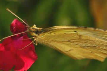Fiscalité et « effet papillon »