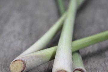 Les plantes créoles gustatives : La citronnelle