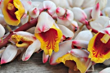 Les plantes créoles gustatives : l'à-tous-maux