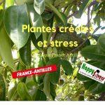 plantes creoles stress chronique