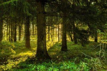 Agirc Arrco, l'arbre qui cache la forêt : 1ère partie
