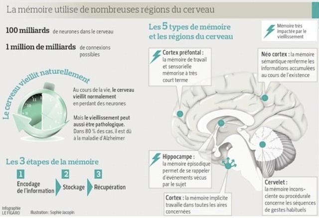 memoire et cerveau