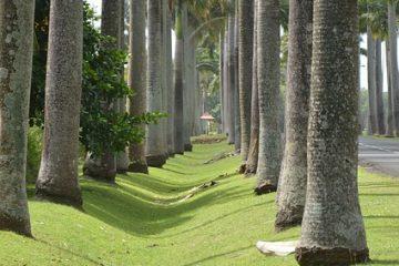 Les randonnées en Guadeloupe (suite)