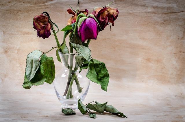 fleurs fanees chagrin