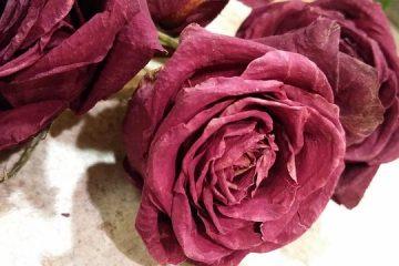 Les frais d'obsèques, un coût non négligeable