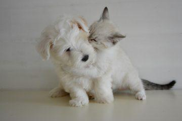 Mon chat, mon chien et moi !