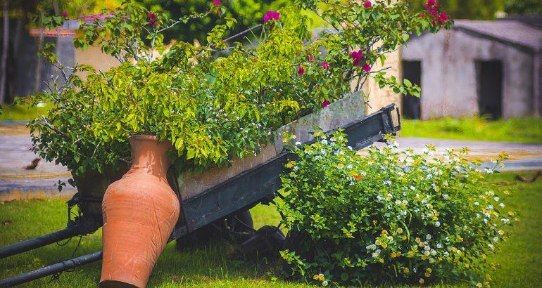 Services à la personne : l'aide au jardinage pour les seniors
