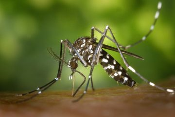 Attention, le nombre de cas de dengue est en augmentation aux Antilles