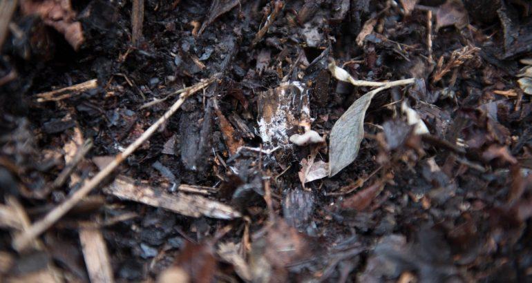 Quand vos déchets deviennent une ressource inépuisable : le compost (2)