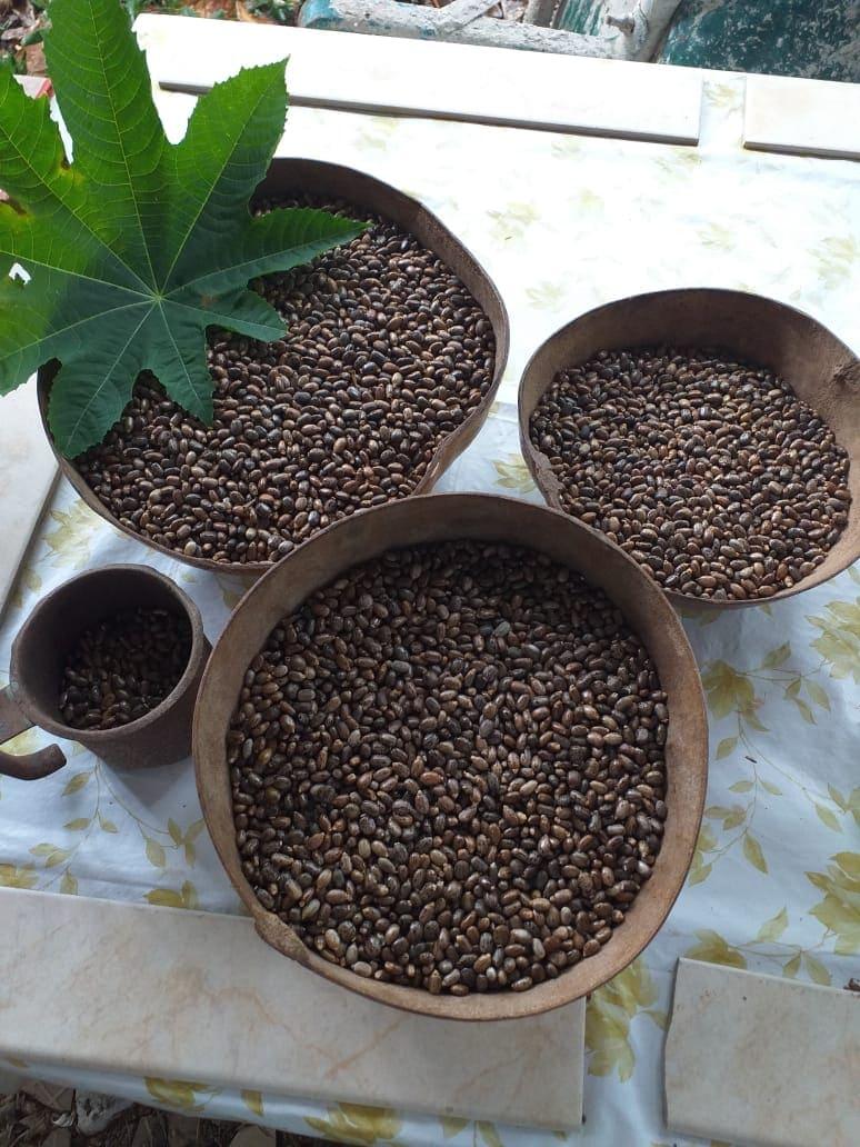 graines de carapate