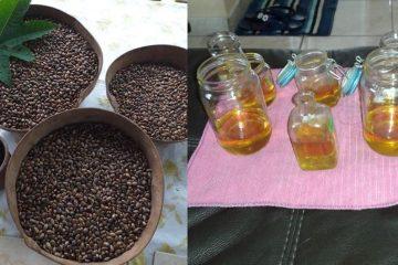 Comment fabriquer son huile de carapate