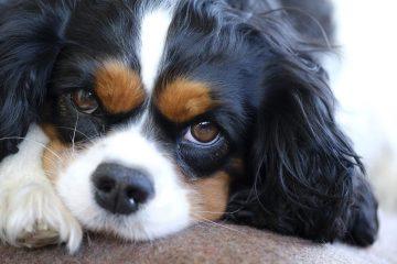 Les seniors et les chiens : une amitié réciproque !